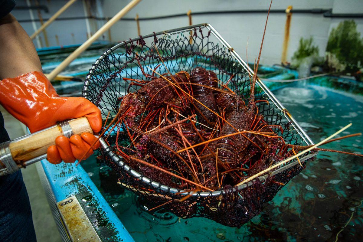 水産会社の2代目がM&Aで販路拡大。「食品 ✕ 九州 ✕ 事業承継」で中小企業の新しいカタチをつくる